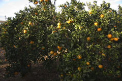 Mediterranean Agriculture Stock Photography