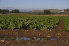 Mediterranean Agriculture Stock Photo
