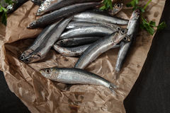 Mediterranean Anchovies Stock Image