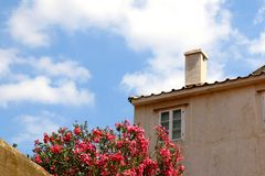 Mediterranean Architecture. Old traditional house and nerium flowers in town Pag, island Pag, Croatia royalty free stock photo