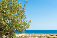 Mediterranean background Royalty Free Stock Photos