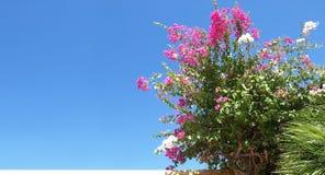 Mediterranean background. Beautiful blowing flowers against blue sky royalty free stock image