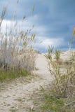 Mediterranean beach. Dune and vegetation in a mediterranean beach Stock Photos
