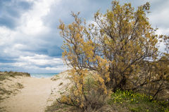 Mediterranean beach. Path in a mediterranean dune`s beach Stock Images