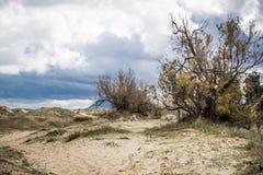 Mediterranean beach. At Valencia coast, with dunes Royalty Free Stock Photos