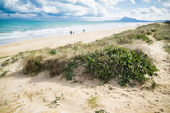Mediterranean beach. At Valencia coast, with dunes and a view to El Montg Royalty Free Stock Images