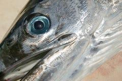 Mediterranean billfish head tetrapturus belone Stock Images