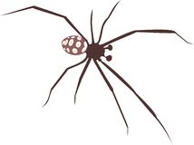 Mediterranean black widow Royalty Free Stock Photo