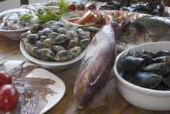 Mediterranean bluefish Stock Images