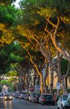 Mediterranean ciry near the sea - road with cars and high pine t Stock Photography