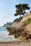 Mediterranean coast and sea with maritime pine Stock Images
