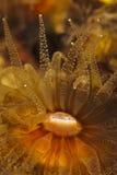 Mediterranean coral Royalty Free Stock Photo