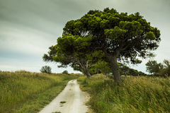 Mediterranean cycling path Stock Photography