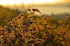 Mediterranean dry grass lit by summer sun at golden hour Stock Photography