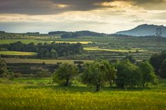 Mediterranean fields full of vegetation. Fields called the Alcusses in the province of Valencia where extra virgin olive oil and great wines are grown. Good area royalty free stock image