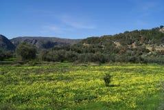Mediterranean fields in Spring season Royalty Free Stock Photography