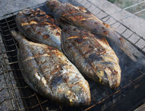 Mediterranean fish. Fresh fish cooking in a grill Royalty Free Stock Photo