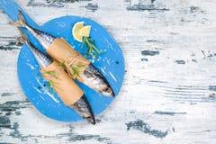 Mediterranean fish eating. Royalty Free Stock Photos