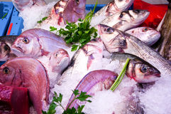 Mediterranean Fish Market Royalty Free Stock Photos