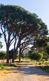 Mediterranean flora and trees by a gravel road to Arcady monastery, island of Crete Stock Photo