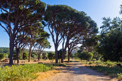 Mediterranean flora and trees by a gravel road to Arcady monastery, island of Crete Royalty Free Stock Image