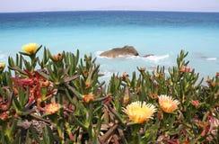 Mediterranean Flowers Stock Images