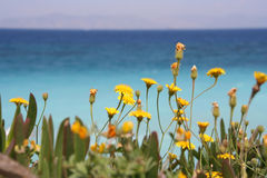 Mediterranean Flowers Royalty Free Stock Photography