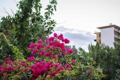 Mediterranean flowers. Garden - mediterranean - tenerife - canary island Stock Photos