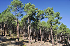 Mediterranean forest at Albarracin range, Spain Royalty Free Stock Photography