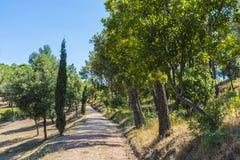 Mediterranean forest. In Costa Brava, Catalonia, Spain Royalty Free Stock Image