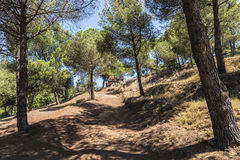 Mediterranean forest. In Costa Brava, Catalonia, Spain Royalty Free Stock Photography
