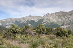 Mediterranean forest in La Barranca Valley Royalty Free Stock Photography