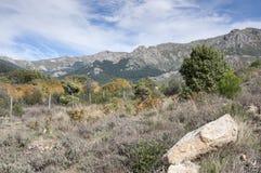 Mediterranean forest stock image