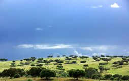Mediterranean forest of oak trees. At Portugal Royalty Free Stock Photography