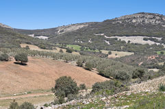 Mediterranean forest. Over quartzite mountains. Photo taken in Montes de Toledo, Ciudad Real Province, Spain. The Montes de Toledo are located in the central royalty free stock photography