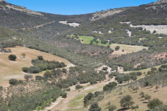 Mediterranean forest. Over quartzite mountains. Photo taken in Montes de Toledo, Ciudad Real Province, Spain. The Montes de Toledo are located in the central Stock Images