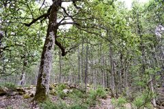 Mediterranean forest Royalty Free Stock Images