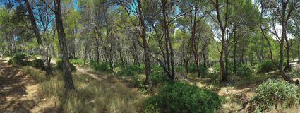 Mediterranean Forest Panorama Stock Images