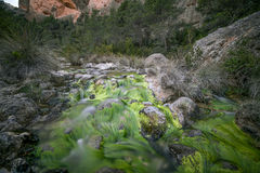 Mediterranean forest. With river Stock Photos