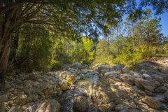 Mediterranean forest. With river Stock Photo