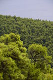 Mediterranean, forest and sea Stock Photo