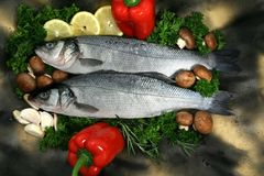 Mediterranean fresh water fish Royalty Free Stock Images