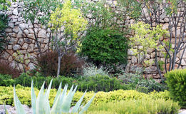 Mediterranean garden. Domesticated ornamental mediterranean garden in Dalmatia. Dalmatian gardens are planted with trees which give fruits (olives, figs, apple Stock Photo