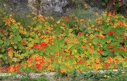 Mediterranean garden flowers Stock Images
