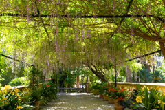 Mediterranean garden on the island of Mallorca Royalty Free Stock Photography
