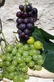 Grapes and figs. Mediterranean: grapes and figs Stock Photos