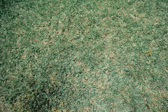 Mediterranean grass. Green, but very dry grass, ideal for backgrounds and textures Royalty Free Stock Images