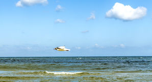 Mediterranean gull flying over the ocean Royalty Free Stock Photos