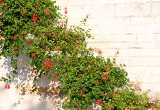 Mediterranean house with red flowering Geraniums Stock Photography
