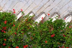 Mediterranean house with red flowering Geraniums Royalty Free Stock Photo